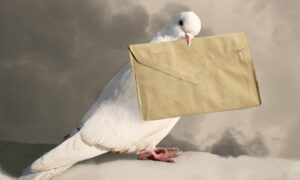 ¿Cómo se orientan las palomas mensajeras?