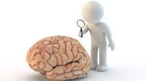¿A qué edad deja de crecer nuestro cerebro?